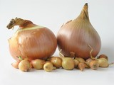huge onions and smallonion bulbs poster