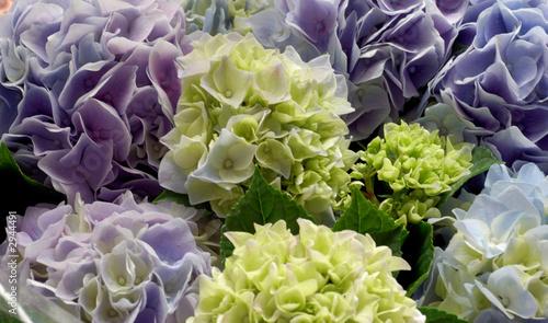 the hydrangea bouquet