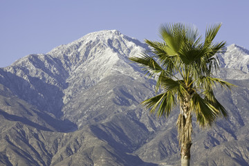 palm tree and mountain