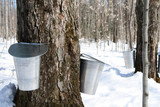 spring – maple syrup season poster