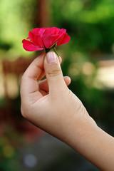 mano con rosa pequeña 2