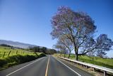 Road with Jacaranda tree in Maui, Hawaii poster
