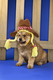 Puppy wearing hat and braids in front of picket fence. poster