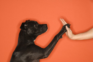 dog giving high five.