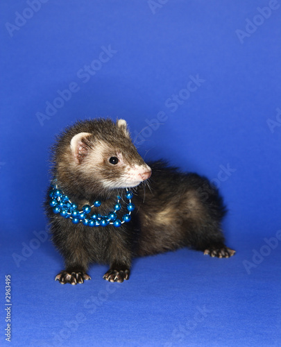 ferret wearing necklace.