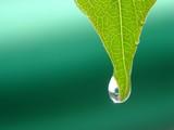 Fototapeta zielony - roślina - Roślinne