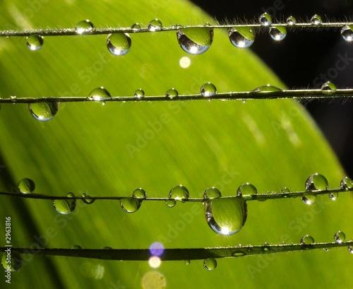 Keuken foto achterwand Paardebloemen en water droplets