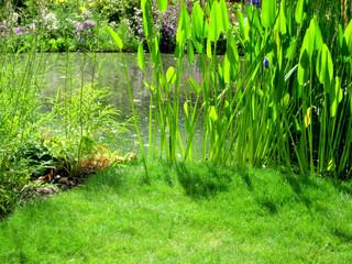 plants near a pond