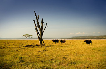 lake nakuru safari view