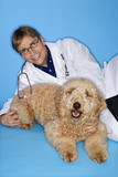Caucasian male veterinarian with Goldendoodle dog. poster