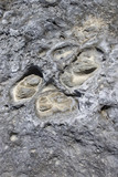 Close-up of rock texture in Maui, Hawaii. poster