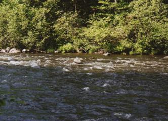 rocks on the riverbank