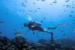 Leinwanddruck Bild - diver surrounded