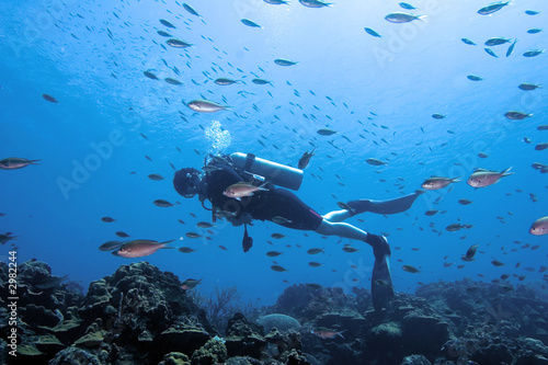 diver surrounded - 2982244