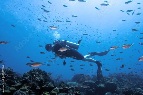 Leinwandbild Motiv diver surrounded