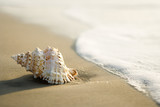 Fototapety Conch shell on beach  with waves.