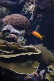 Fish swimming around coral in aquarium in Lisbon, Spain. poster