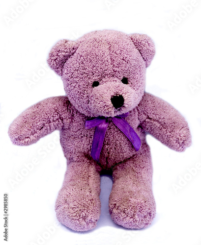 violet bear toy