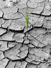 0958 - changement climatique
