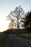 sunrise and bare trees poster