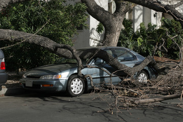 car trapped under fallen tree after wind storm. lo