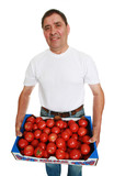 delivery man with box full of fresh tomatoes poster