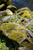 moss on stones and river poster