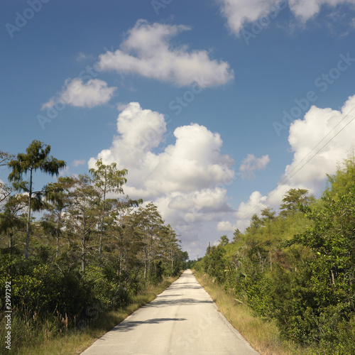 road in florida everglades.