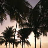 Palm trees at sunset in Miami, Florida, USA. poster
