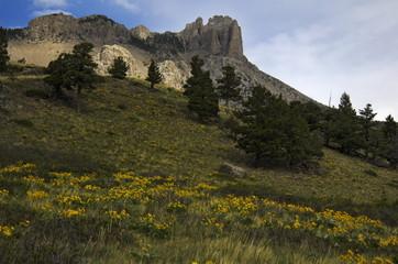 montana spring scenic