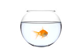 a golden fish in a bowl