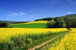 champs de colza - 3024440
