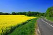 route et champ de colza