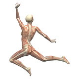 anatomy in motion - woman leaping 2 poster