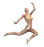 anatomy in motion - woman leaping 1 poster