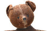 seedy teddy bear, portrait