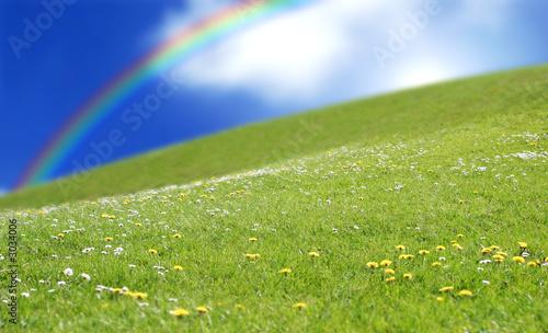 prairie rainbow grass