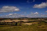 view to the cheviots poster