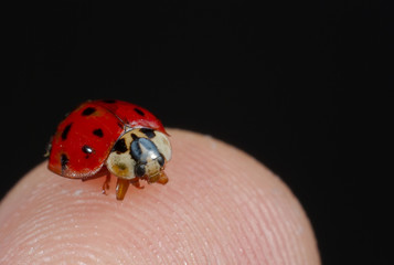 lady bug on finger
