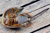 malaysia, langkawi: strange crustacean poster