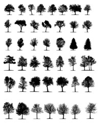 trees isolated on white background