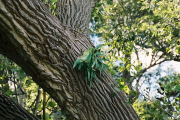 staghorn fern on tree
