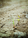 life on dry soil poster