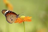butterfly - 3053073