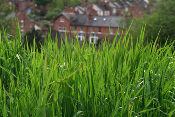 sunny green grass