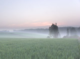 sunrise over renewable energy crops poster