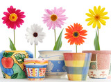 daisies in pots - 3064624