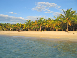 tropical caraibe beach with palm tree and white sand, roatan isl