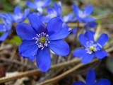 Fototapeta wiosna - piękny - Kwiat