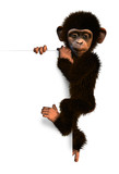 cartoon chimp on sign edge poster